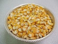 kernel (plant part)
